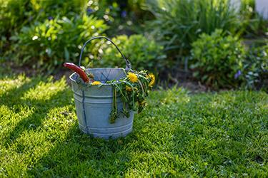 pulling weeds in a spring garden